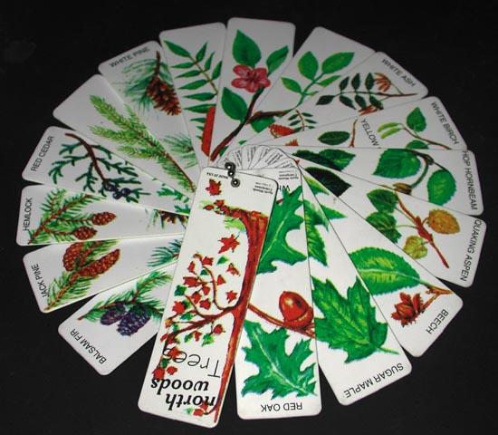 north american tree identification guide